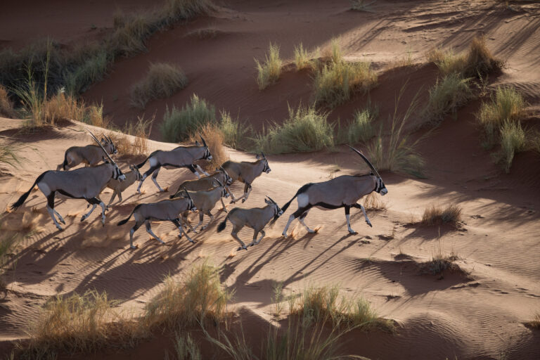 Scenic-Helicopter-Flight-Oryx-andBeyond-Sossusvlei__1_