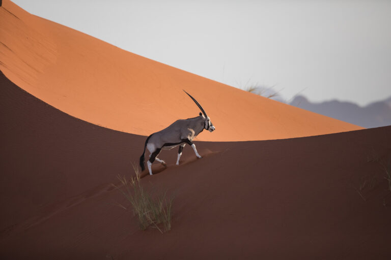 Scenic-Helicopter-Flight-Oryx-andBeyond-Sossusvlei__2_